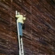 Man on a stepladder hammering into wall — Видео