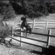 Two horses rearing up in corral — Vídeo de stock #26643721