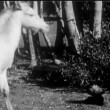 Foal sniffing skunk — Stock Video