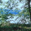 View of lake behind trees — Stok Video #26644927