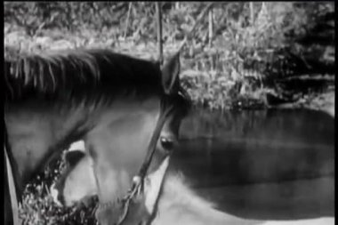 Horse pushing young foal into river — Stock Video