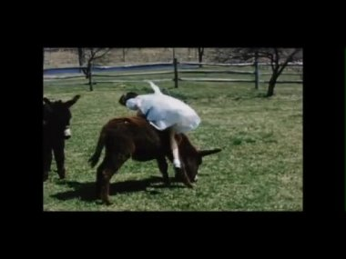 Little girl sitting on a donkey while other kids play in field — Stock Video