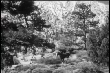 Long shot of horse running through forest — Stock Video