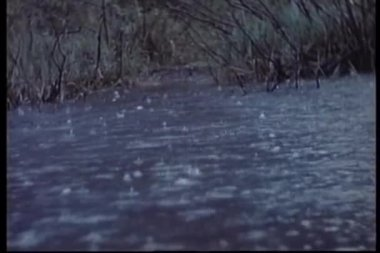 Wide shot of raindrops falling into stream — Stock Video