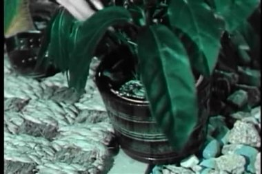Woman retrieving key hidden under potted plant — Stock Video
