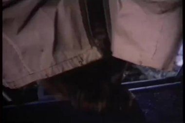 Wide shot of bear pushing its way through tent — Stock Video