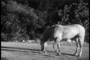Horse picking up cowboy hat and walking away — Stock Video #26644011