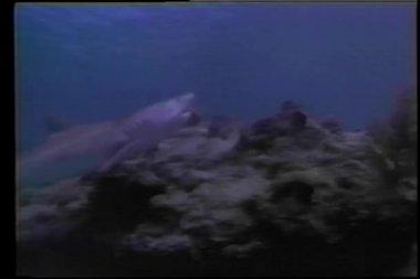 Tubarão natação subaquática — Vídeo Stock