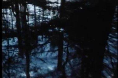 выстрел точки зрения лица, прогулка по лесу — Стоковое видео