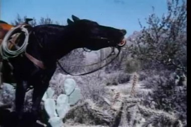 Side view of braying horse — Stock Video