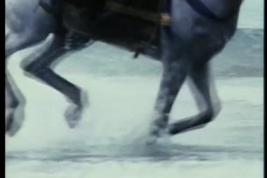 Close-up of horse galloping through water on seashore — Stock Video