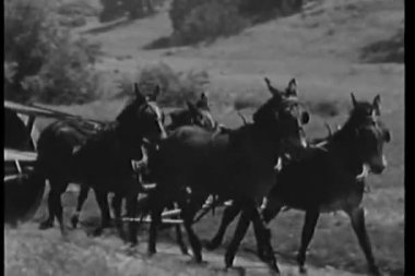 Man driving horse drawn wagon on country road — Stock Video
