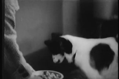 Medium shot of woman's hands feeding bowl of food to dog — Stock Video
