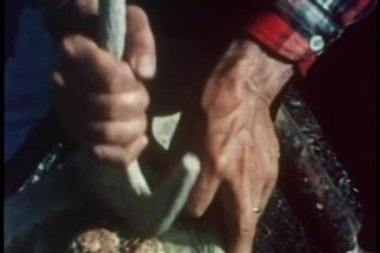 Close-up of hands tenderizing meat for pemmican — Stock Video