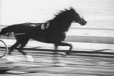 Horse trotting in harness race — Stock Video