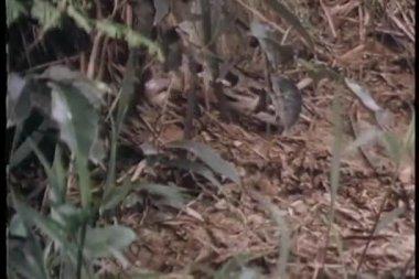 Ormen kryper på marken — Stockvideo