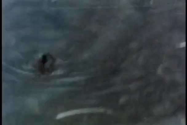 Spider scurrying across water's edge — Vidéo