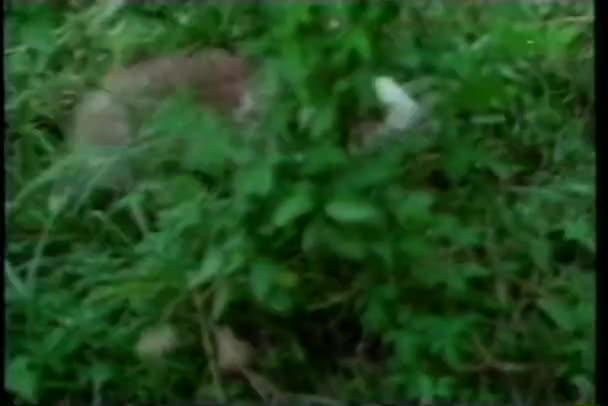 Conejo corriendo en pasto — Vídeo de stock