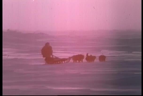 Vista trasera del esquimal tirados por perros de trineo cabalgando hacia el atardecer — Vídeo de stock