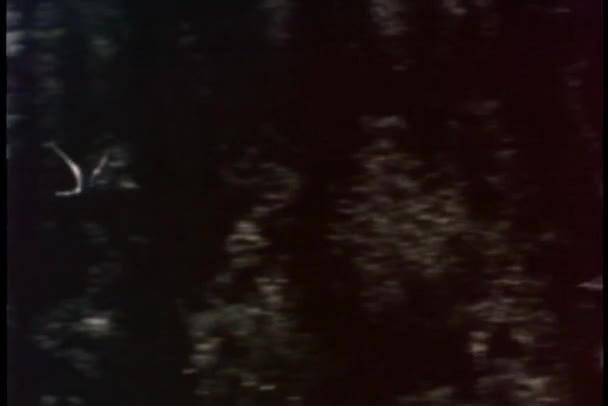 Oiseau qui vole à travers la forêt — Vidéo