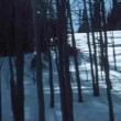 Snowmobiling on wooded slope — Stock Video