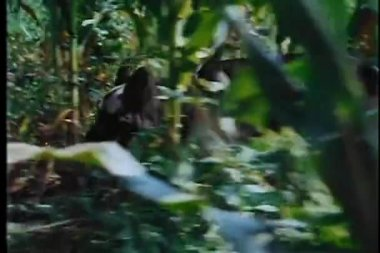 Low view of search party walking through woods — Stock Video