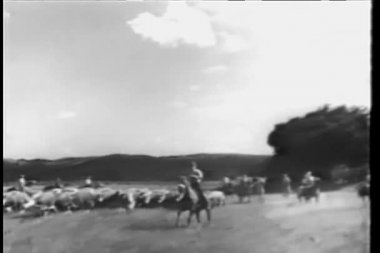 Cowboys herding cattle on ranch — Stock Video