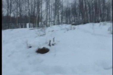 Tiro do ponto de vista da pessoa andar pela neve cobriu a região — Vídeo stock