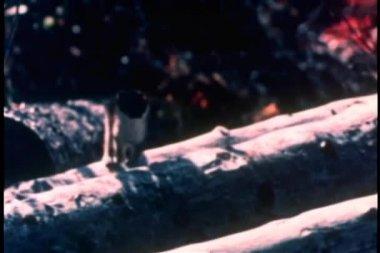 Marten cat in the wilderness — Stock Video