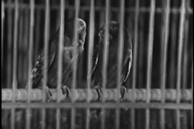 Two parrots in a birdcage — Stock Video