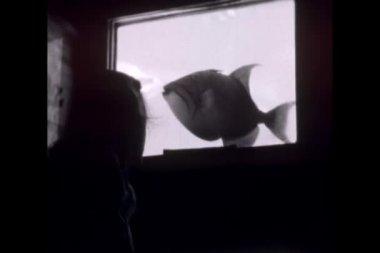 Niño mirando peces de acuario — Vídeo de stock