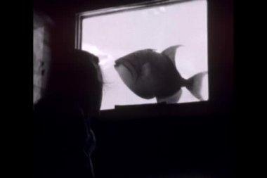 孩子盯着水族馆的鱼 — 图库视频影像