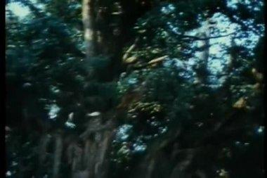从一处跳到另一个目录林中的蜘蛛忍者 — 图库视频影像
