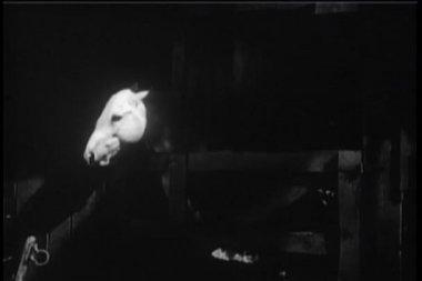 Stabiele poort openen en weg te rennen van het paard — Stockvideo