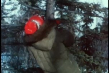 Person climbing pine tree — Stock Video