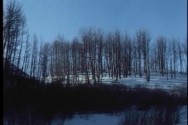 Panning shot of bare trees in winter — Stock Video