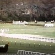 Long shot of horse falling during steeplechase race — Stock Video #26662971