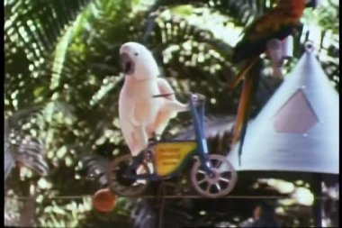 Parrot on miniature bicycle riding on tightrope
