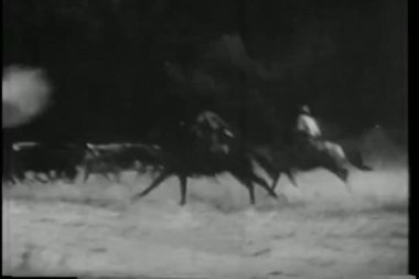 Cowboys on horseback stealing a herd of cattle — Stock Video #26663227