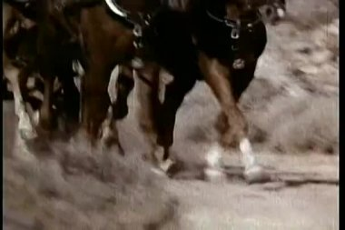 Low angle view of galloping horses — Stock video