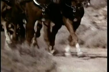 Low angle view of galloping horses — Stok video