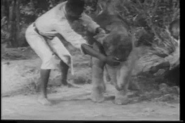 African men capturing baby elephant — Stock Video