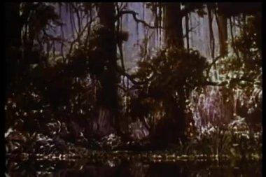 Široký záběr na gazely běh lesem — Stock video