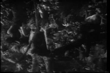 Three monkeys sitting in tree — Stock Video