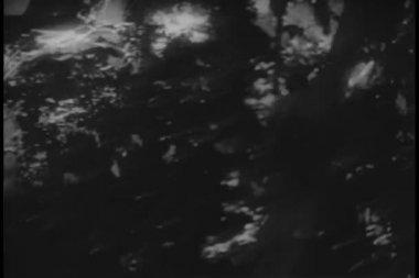 Man climbing up palm tree — Stock Video