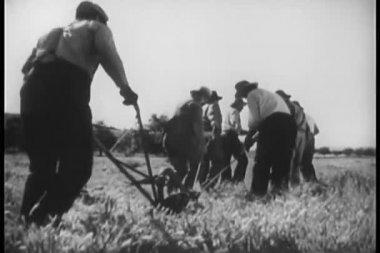 Rear view of men plowing field — Stock Video