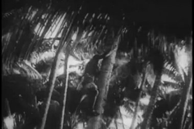Polinesios hombres bajar palmeras — Vídeo de stock