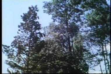 низкий угол зрения дерево падает — Стоковое видео