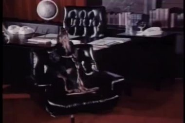 Dog on chair howling — Stock Video