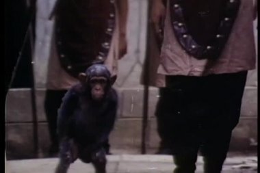 Monkey and soldier walking through a path of soldiers — Stock Video
